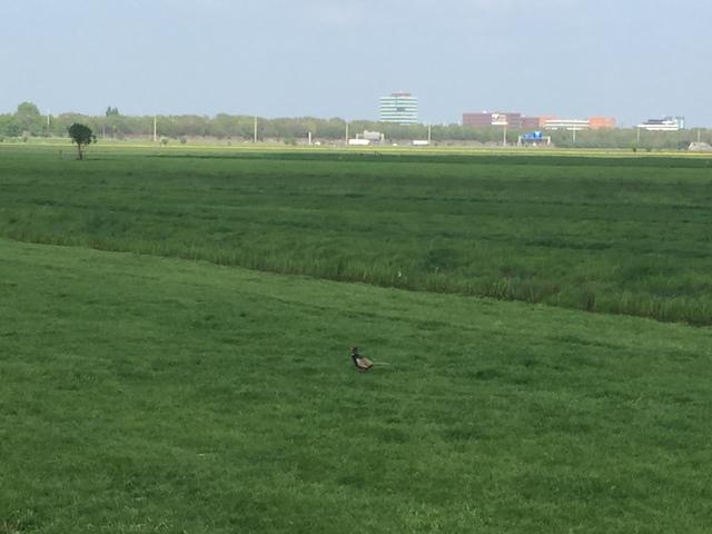Rijnenburg, gezien vanaf de Ringkade. Op de achtergrond de A12 en bedrijventerrein Oudenrijn.